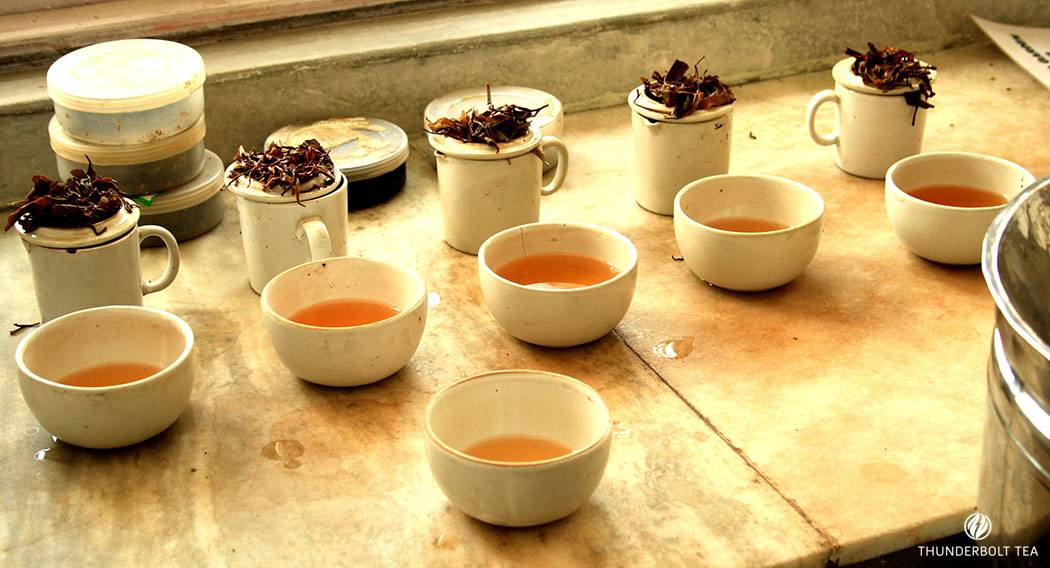 Tea Tasting in tea gardens